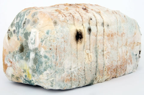 a loaf of moldy bread