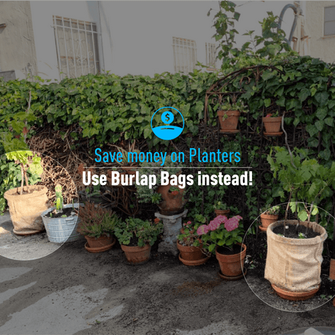 Save money on Planters. Use Burlap Bags instead!