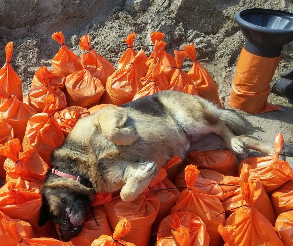 Dog sleeping on pile of filled orange 14x26 poly sandbags tied using zip ties