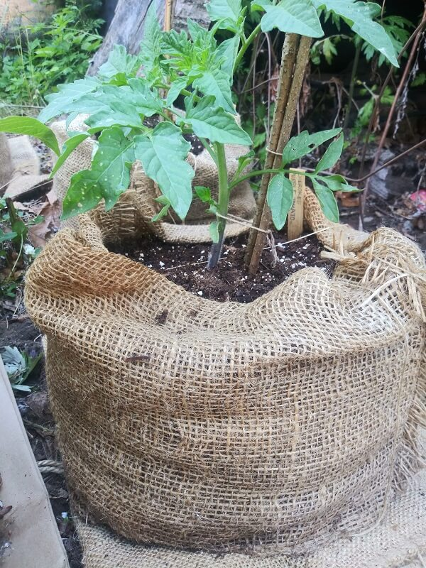 18-inch x 30-inch Burlap Potato Sacks (100% Biodegradable)