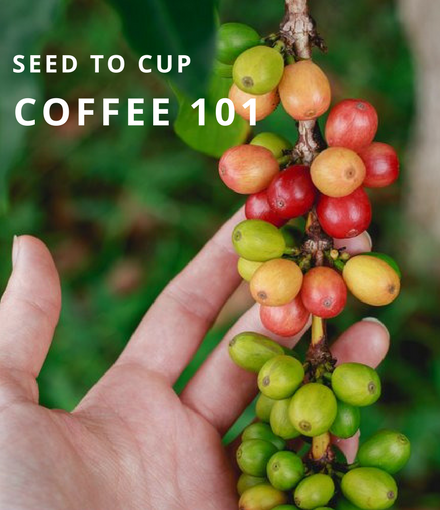 Seed to Cup: Coffee 101 • Java Love Church Street