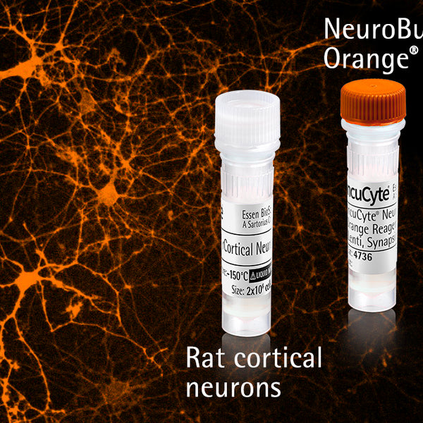 IncuCyte® NeuroActive Orange Cell and Reagent Kit