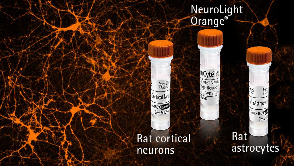 IncuCyte® NeuroPrime Orange Cell and Reagent Kit