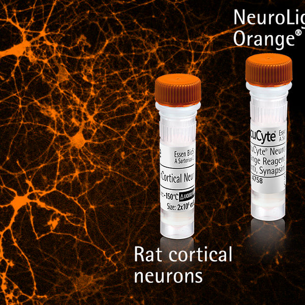 Incucyte® NeuroPrime Orange Kit