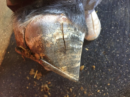 Hoof Conditions:  Two Different Ways to Repair a Quartercrack
