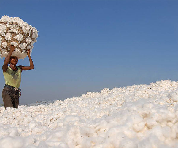 A mountain of cotton with a smiling woman carrying a load to drop on top
