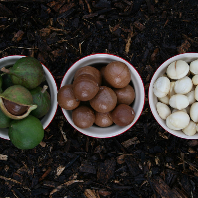 4 Benefits of Macadamia Oil for your Skin