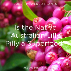 Is the Native Australian Lilly Pilly a Superfood?