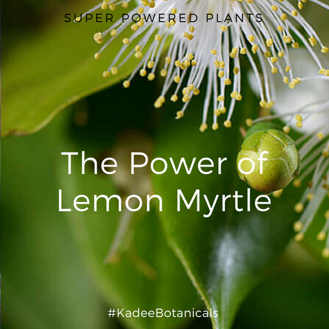 The Power of Lemon Myrtle