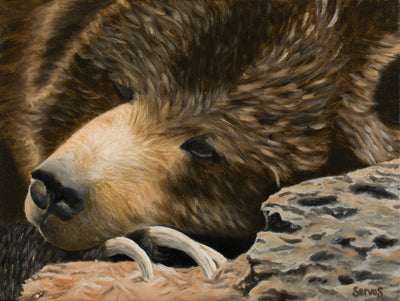 Skoki the Grizzly Bear Print