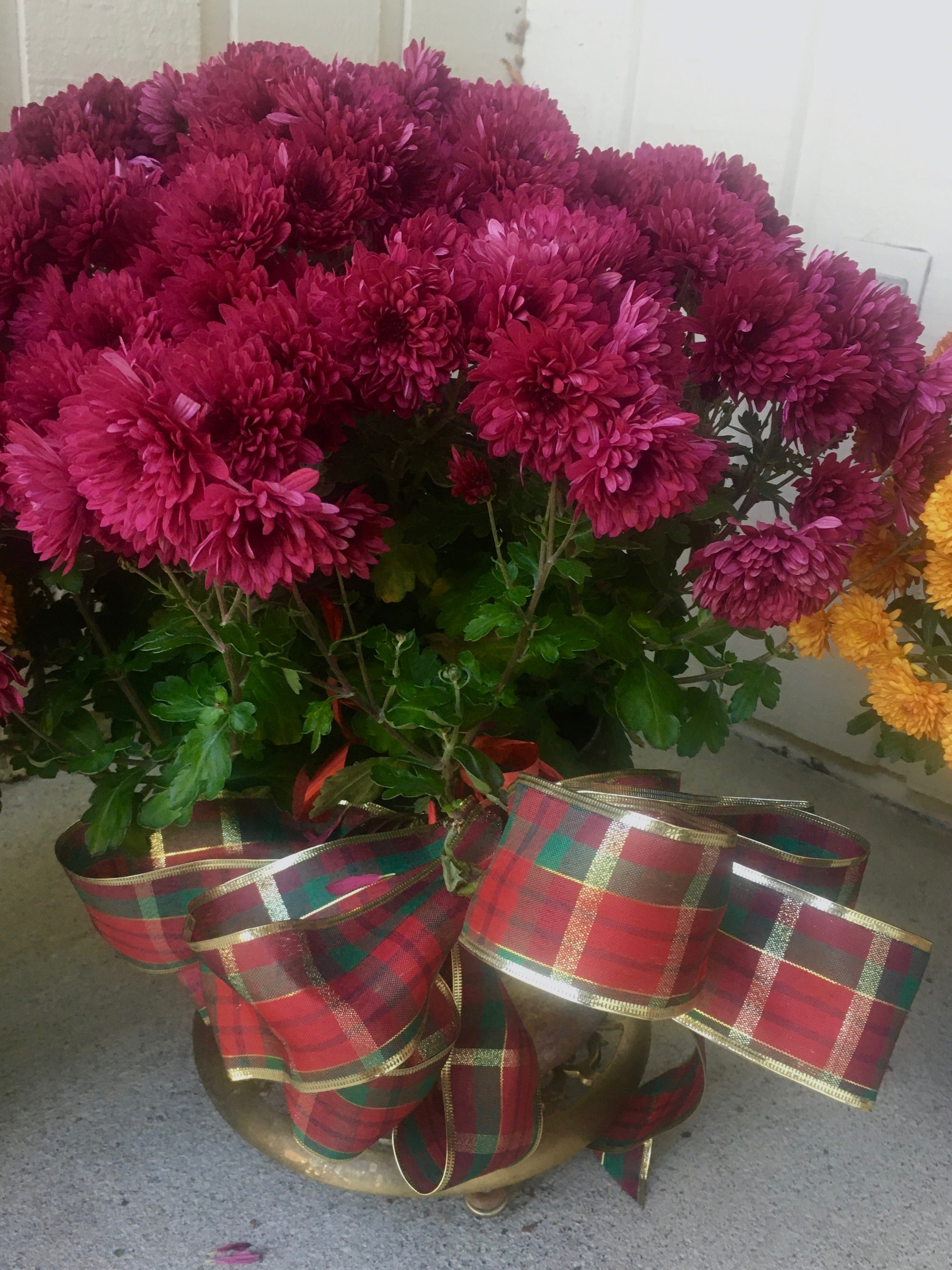Chrysanthemums with Christmas ribbon at craft show