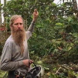 Breadfruit Tree Pruning Guide: Reducing a Very Tall Tree
