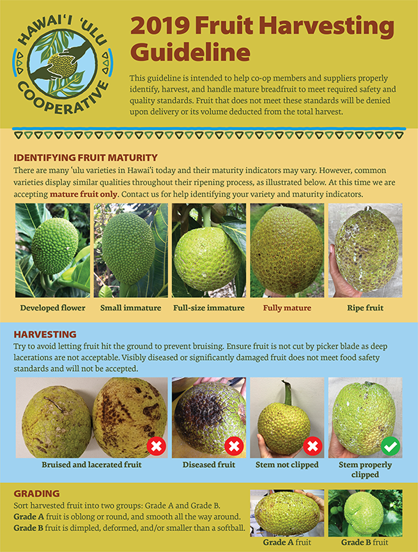 Fruit Harvesting Guideline