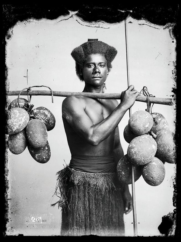 For millennia, breadfruit—shown here carried by a Fijian around the end of the 19th century—has been prized for its wildly nutritious properties and resilience, but it has a dark past. (Thomas Andrew)