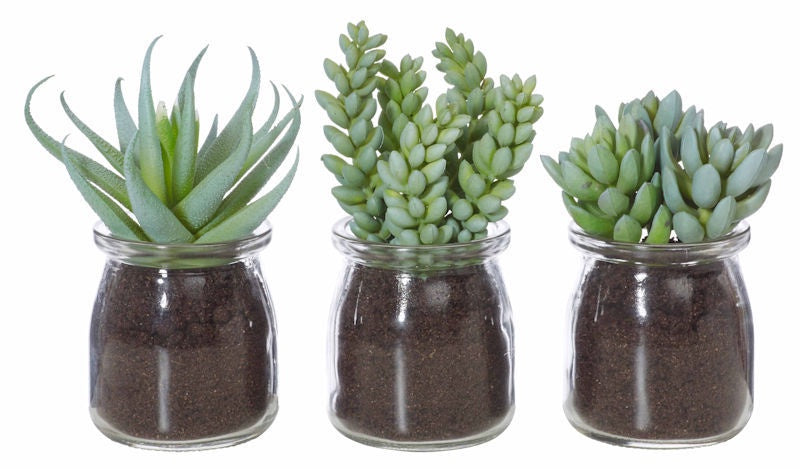 Succulent Jars Assorted (Faux)