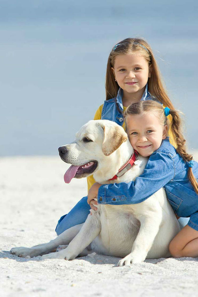 10 Great Dog-Friendly Vacation Ideas