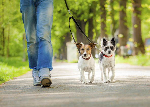 How to walk two Dogs at the same time