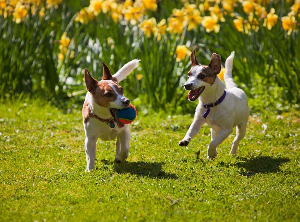 5 Ways to Get Your Dog Ready for Spring and Summer