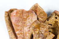 Indian Almond/Terminala Catappa Leaves (10 leaves)