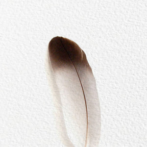 BARN OWL FEATHER (DARK TIP)