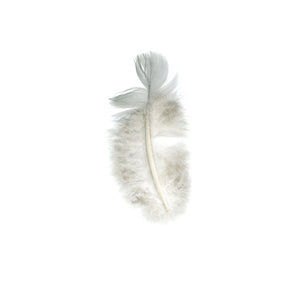 GOSLING FEATHER