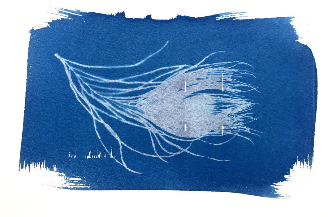 PEACOCK FEATHER STUDY