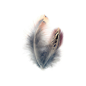 PHEASANT HEN FEATHERS