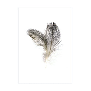 PINTAIL FEATHERS
