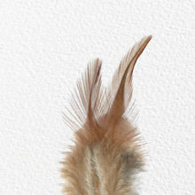POINTED HEN FEATHERS