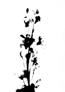 PRESSED LINARIA FLOWER STEM I
