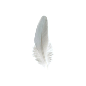 TERN FEATHER