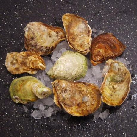 Fresh Gooseberry Bay Oysters