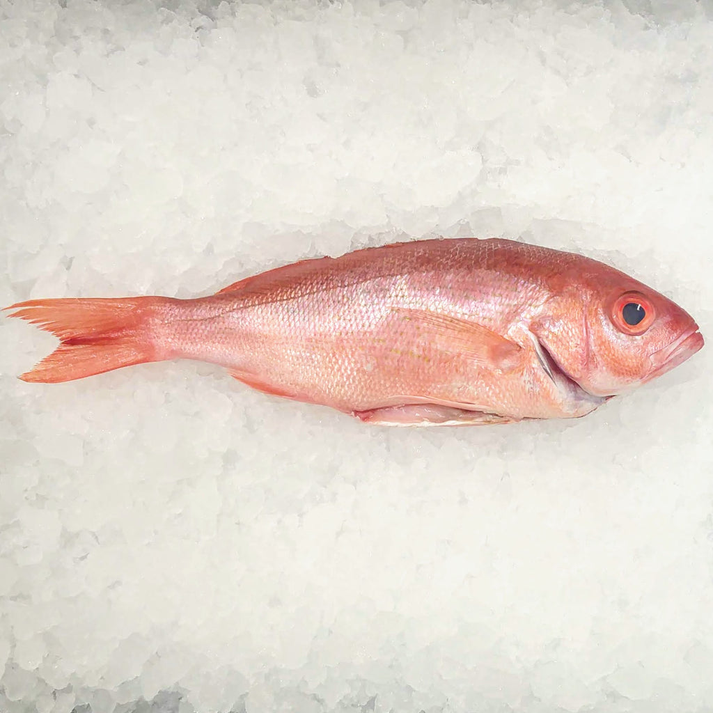 Whole B-Liner Red Snapper