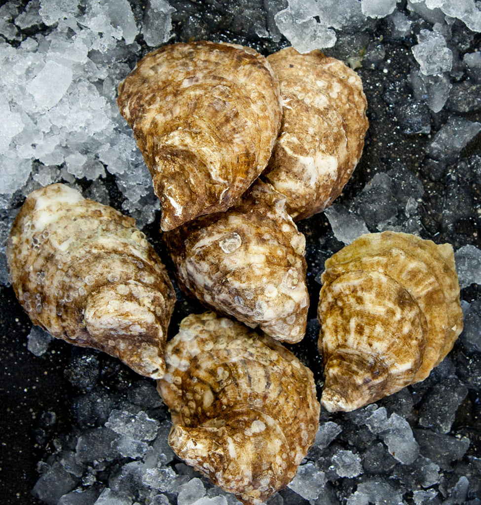 Fresh Beausoleil Oysters
