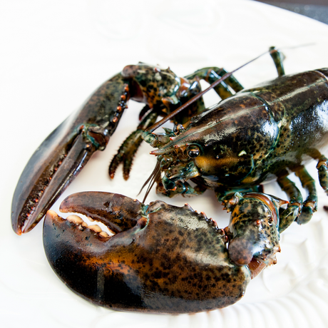 "Canadian Atlantic Lobster ""Halves"" (1.61 lb avg. @ $18.99/lb)"