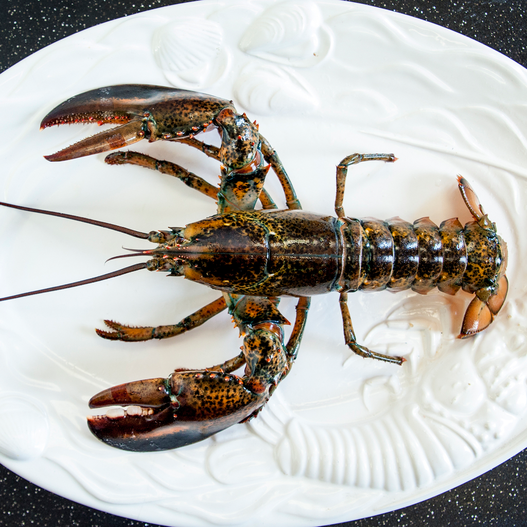 Live Canadian Atlantic Lobster (1 1/4 lb)