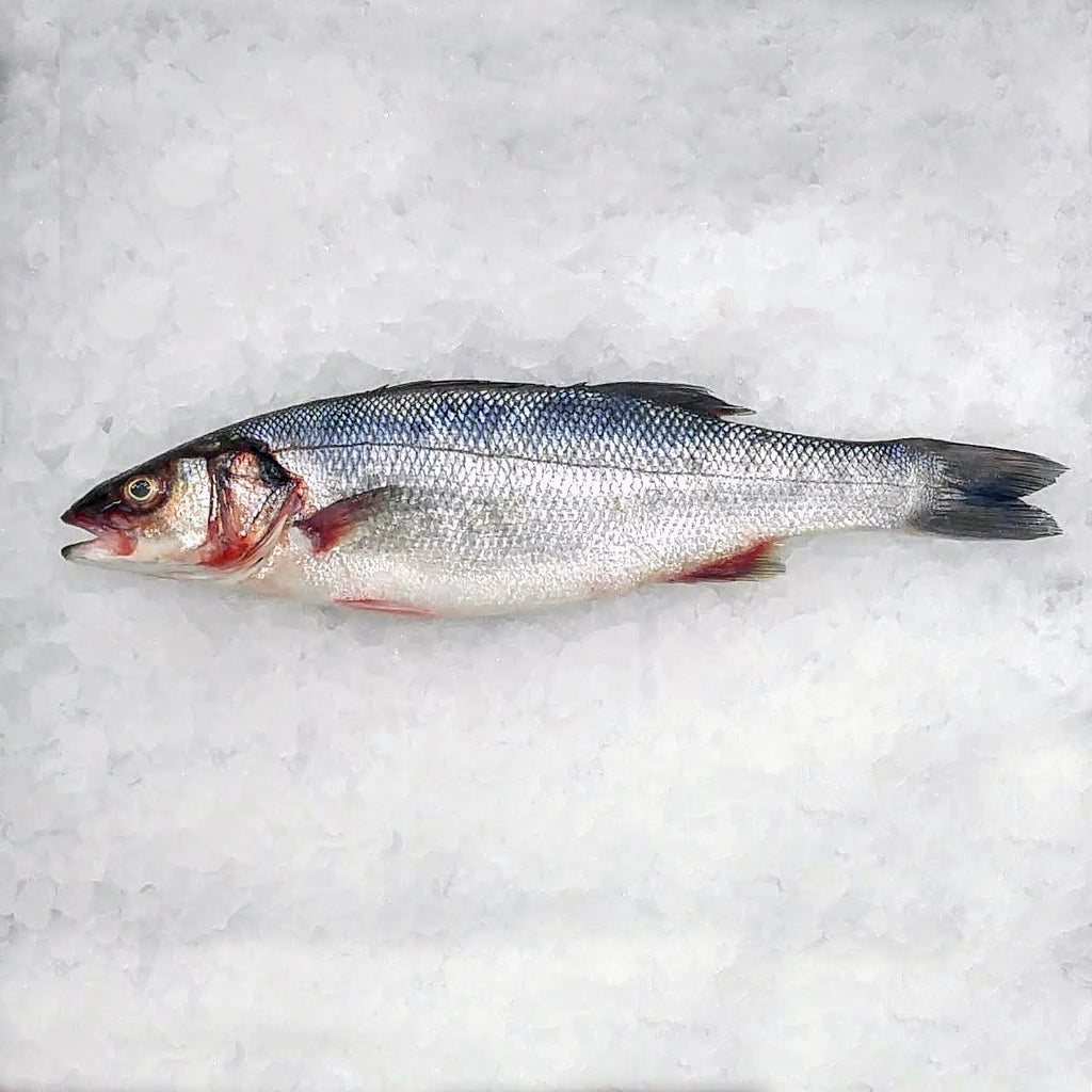 Fresh Whole European Sea Bass