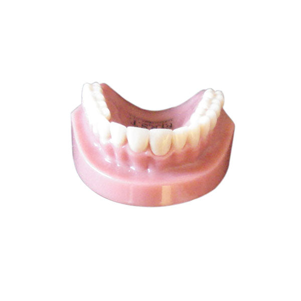 Maxillary Crown & Bridge Model