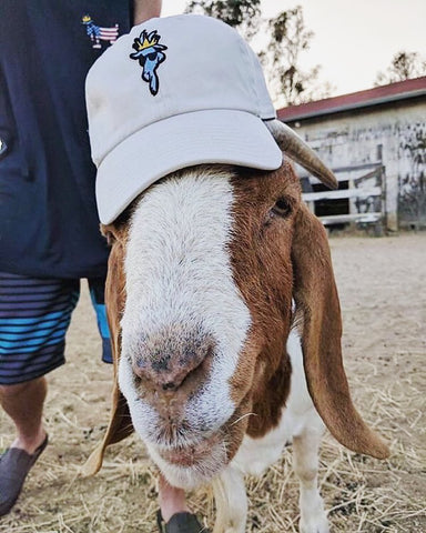 Chuck Da Goat wearing his own hat