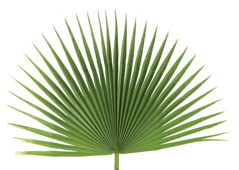 Fan Palm Decoration - Bag of 4 - Gerken's Religious Supplies
