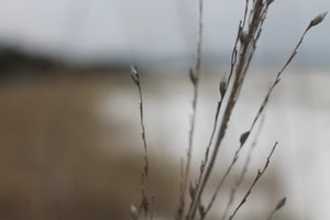 Blurred image of sea oats and marsh coastline on overcast day