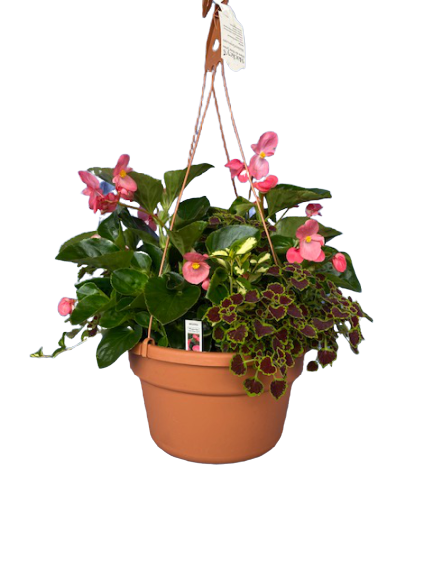 "12"" Partial Shade/Shade Hanging Basket Combo"
