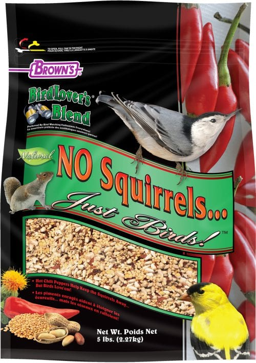 No Squirrels Just Birds