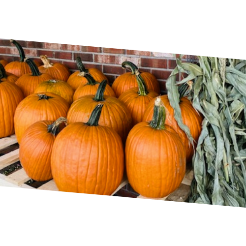 Pumpkins - .39-cents / lb.
