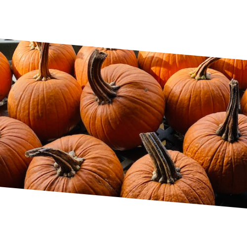 Sugar Pumpkins - .69-cents / lb