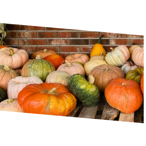 Large Funky Pumpkins & Gourds - .89-cents / lb
