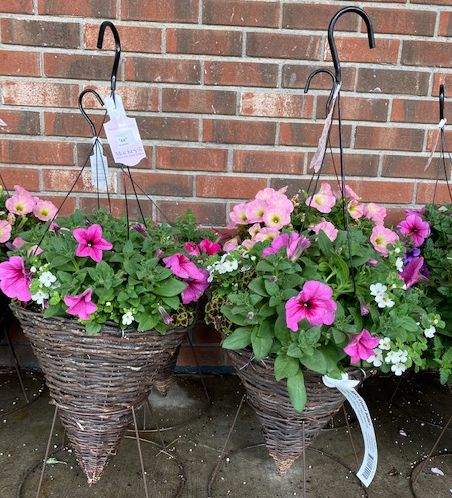 "14"" Cone Hanging Basket"