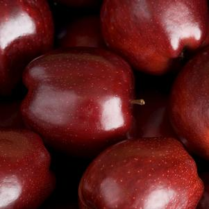 Apple, Red Delicious (Malus X Red Delicious)