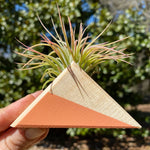 Triangle Air Plant Magnet