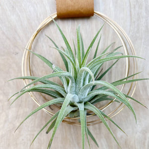 Load image into Gallery viewer, U-Shaped Air Plant Wall Hanging